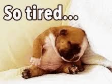Tired Dog Meme - tired gifs tenor