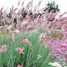 5 ornamental grasses to put on your garden wish list