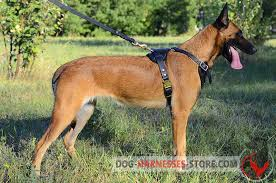 belgian shepherd training video agitation protection leather dog harness for belgian malinois h1