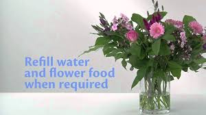 flower food packets how to use chrysal flower food packets