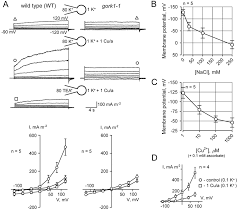 arabidopsis root k efflux conductance activated by hydroxyl