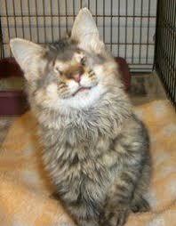 Blind Cat Sanctuary Blind Cat Rescue U0026 Sanctuary Inc Feline Buddies Pinterest
