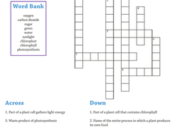 photosynthesis worksheets u0026 free printables education com