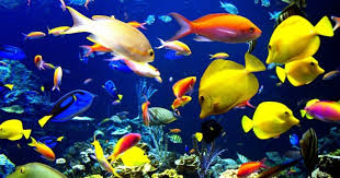 aquarium fish learning kingdom