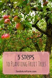 5 steps to planting fruit trees fruit trees planting and plants