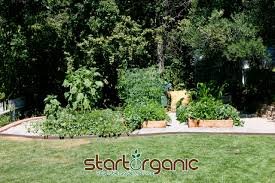 family vegetable garden startorganic vegetable garden service now offers organic gardening