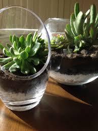 how to create a succulent terrarium snapguide