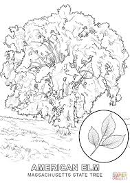 massachusetts state tree coloring page free printable coloring pages