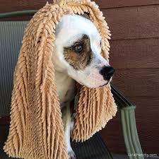 Soggy Doggy Doormat Soggy Doggy Super Shammy Lola The Pitty