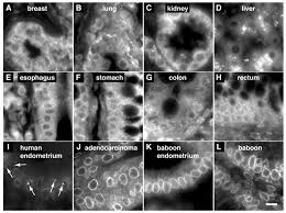 nuclear pore complex proteins mark the implantation window in