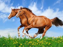 two red horses galloping in a field with green grass beautiful hd