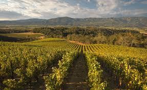 Backyard Vineyard Design by Wine Merryvale Vineyards