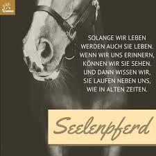 pferdesprüche 505 best pferde images on horses pretty horses and