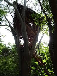 14 pitchandikulam treehousecommunity