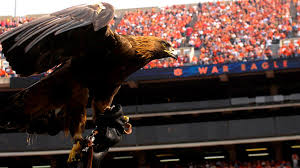 auburntigers com phillip marshall eagle s flight an enduring