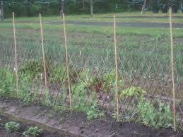 attractive vegetable garden fence interior u0026 exterior doors