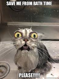 Save Me Meme - save me from bath time please cat bath make a meme