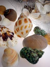 assorted seashells seashells assorted 12oz