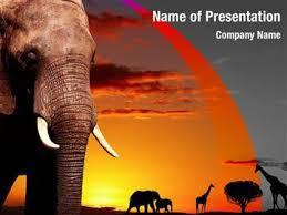 african wild animals powerpoint templates african wild animals