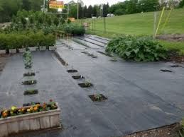 vegetable gardening with landscape fabric weed barrier inch by