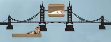 introducing cat themed wall decals decorative accents for cat