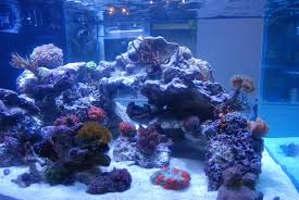Live Rock Aquascaping Aquascaping Show Your Skills Page 3 Reef Central Online