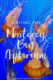 Airbnb Monterey Ca by Best 20 Monterey Bay California Ideas On Pinterest Monterey Bay