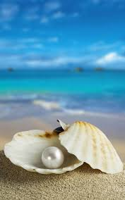 seashells live wallpaper android apps on google play