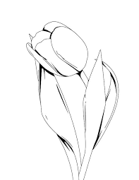 25 beautiful tulip drawing ideas on pinterest flower drawings
