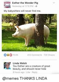 Funny Pig Memes - 25 best memes about pigs pigs memes