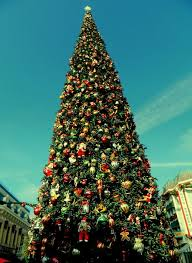 big beautiful christmas tree on pictures photos and