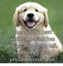 the world best antidepressant has 4 legs a wagging tailo and comes
