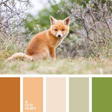 cvetovaya palitra 1254 color combinations pinterest foxes