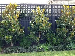 evergreen trees for garden swebdesign