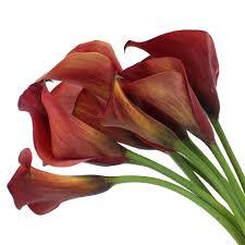 Calla Lily Flower Red Mini Calla Lily Flower