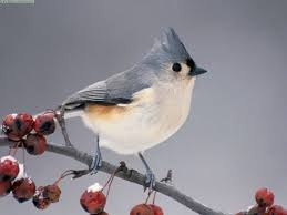 america u0027s top 10 backyard birds mobilelife today