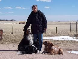 rescue an australian shepherd puppy 4paws miniature aussies