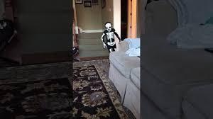 Kids Skeleton Halloween Costume by Skeleton Morphsuits 4 Year Old Wearing Size Kids Medium