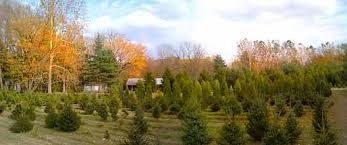 mattern u0027s pine ridge nursery real lafayette indiana christmas