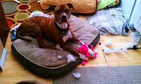 homemade dog toys wolf u0027s pack