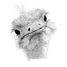 508 best pen u0026 ink drawings images on pinterest drawing