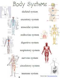 systems of the body u2013 hd m com