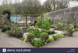 climbing plants uk garden stock photos u0026 climbing plants uk garden