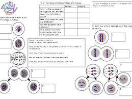 gcse biology worksheets for cells dna homeostasis u0026 kidneys