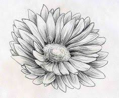 flowers drawing and art image flower drawings pinterest