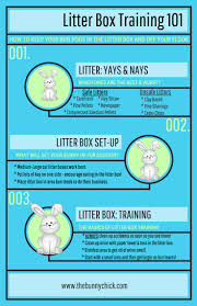 best 25 bunny care ideas on pinterest rabbits pet rabbit and