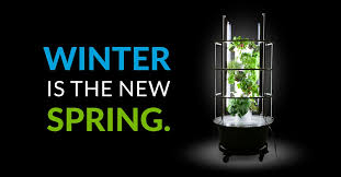 Winter Indoor Garden - when u201csomething u0027s growing in the kitchen u201d isn u0027t a bad thing