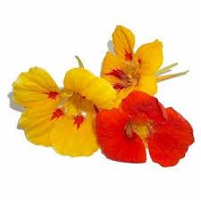 Edible Flowers Edible Flowers Article Gourmetsleuth