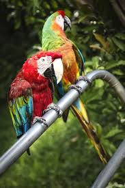 parrots in paradise kealakekua hawaii exotic bird 139 best home sweet home images on pinterest hawaii travel