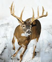 When Do Deer Shed Their Antlers by Tips And Tactics How To Hunt Whitetail Deer Outdoor Life